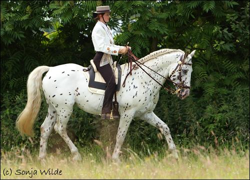 Pferd Mit Kandare Reiten Reiten Mit Kandare