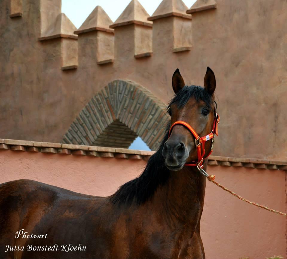 Pferd für Heike Bester-Dassler