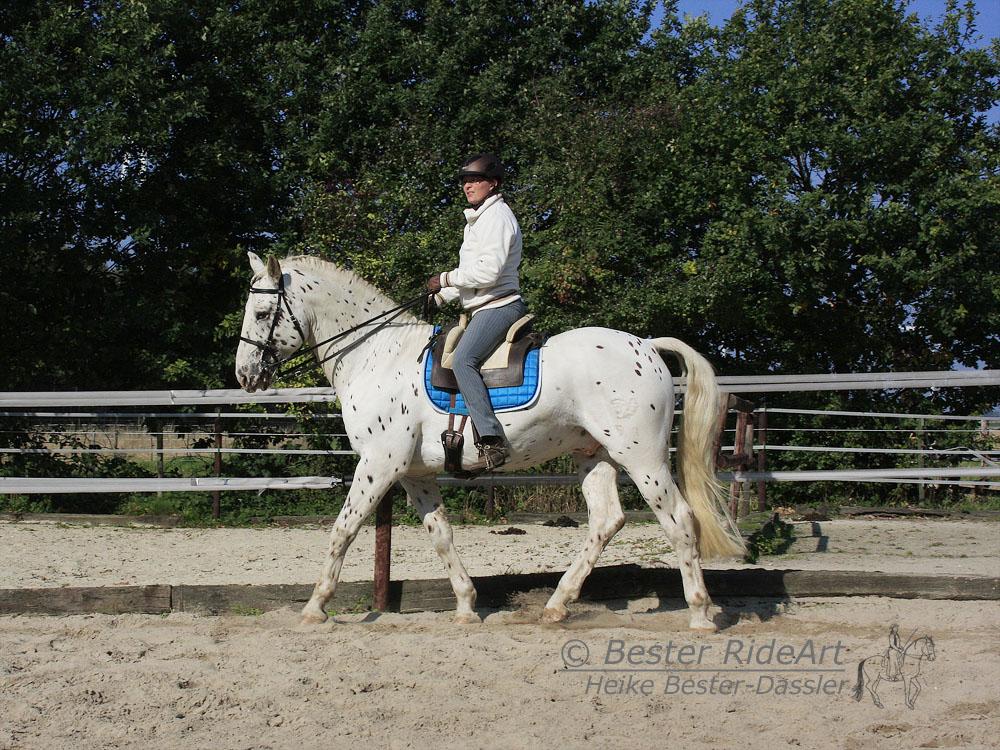 Mein Pferd hat die Nase vorn