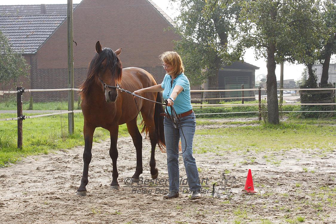 Ein Pferd wird nicht als Reitpferd geboren. Drum ist es wichtig dem Pferd alles beizubringen, was es später können soll.