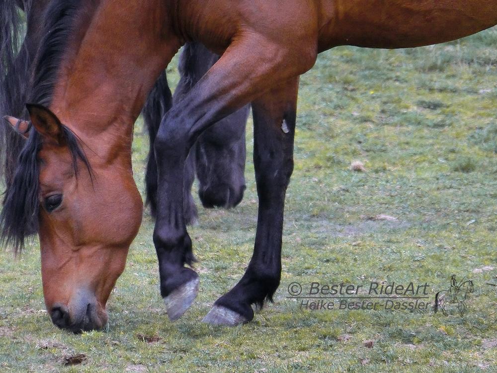 Wirtschaftlichkeit von Pferdebetrieben
